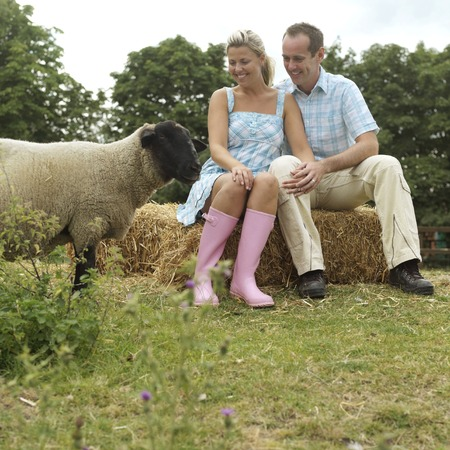 Man and woman sitting on haystack, looking at a sheep photo