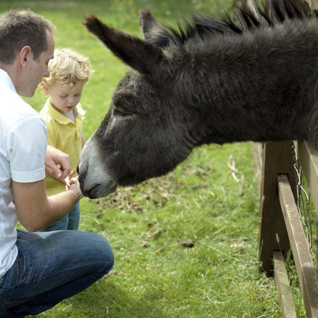 Man and boy playing with donkey in the farm