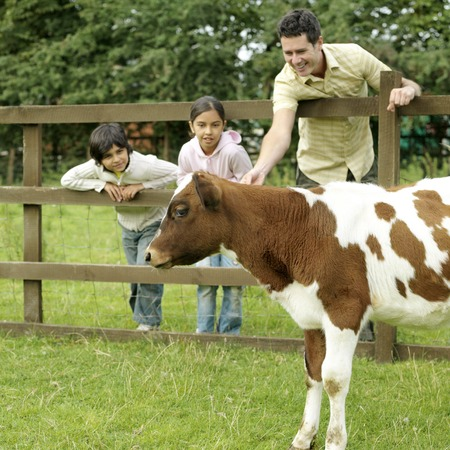Man reaching out to pat a calf while boy and girl looks on