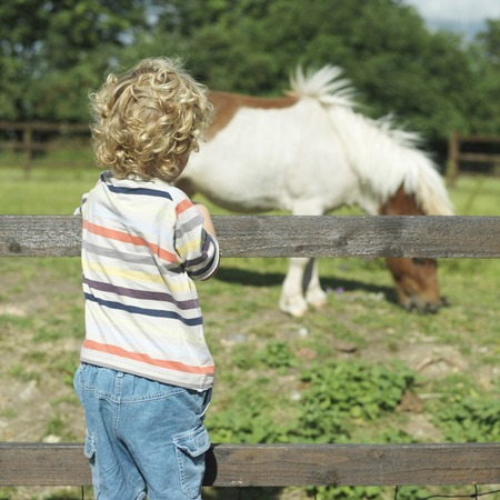 Boy looking at pony in a farm