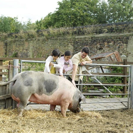 Man, boy and girl patting a pig at the farm