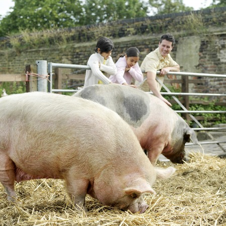 Man, boy and girl patting a pig at the farm photo