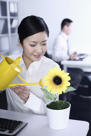 Businesswoman watering sunflower on her table photo