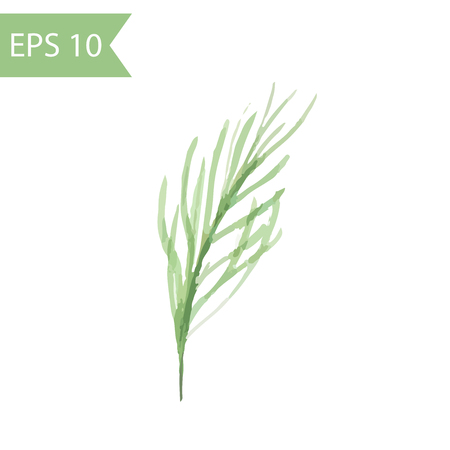 Vector watercolor pine branch. Simple illustration of green branch with needles isolated on white background. 일러스트