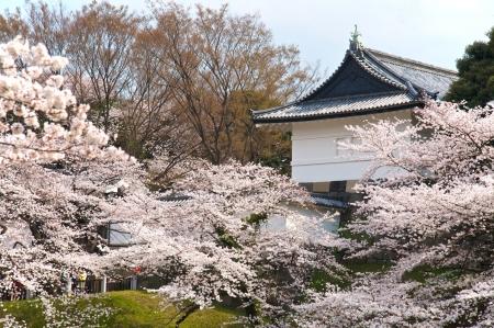 royal: Tokyo