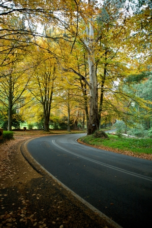 curve road: Autumn colors in a forrest, travel