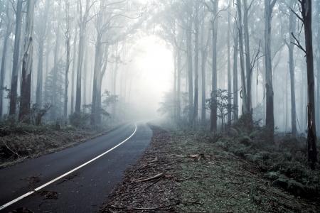 undergrowth: Road through a misty forrest, Journey
