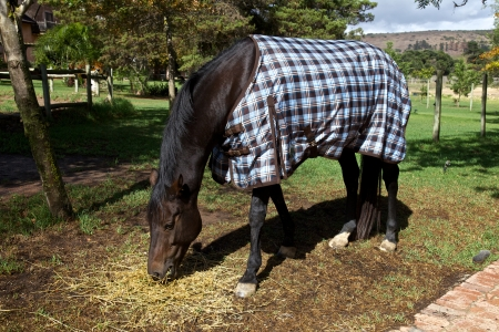 blanket horse: Horse with a blanket, country  Stock Photo