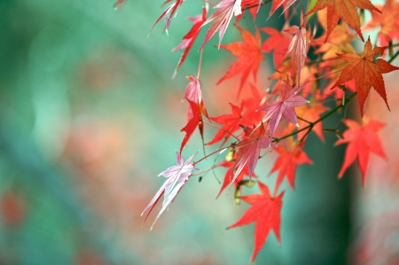 changing colors: Autumn leaves