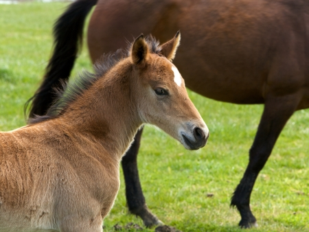 colt: Horses, countryside