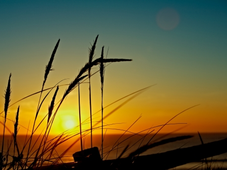 costal: Sunset over the sea with reeds