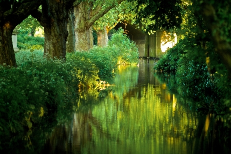 mystical forest: Tranquil river Stock Photo