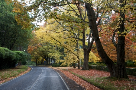 Fall Trees with a road through a forrest photo