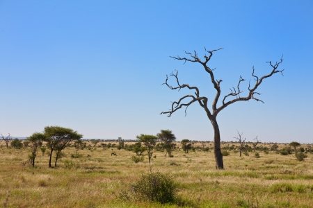 game reserve: Savanna, Bushveld scene in South Africa Stock Photo