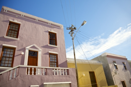 south african birds: Bo Kaap District, Cape Town