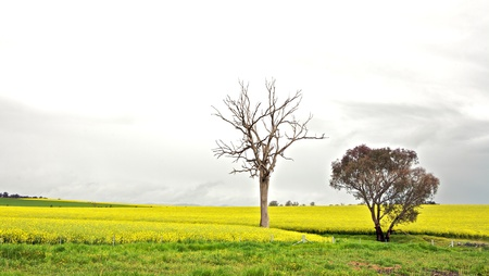 Spring field with trees,  Summer 免版税图像