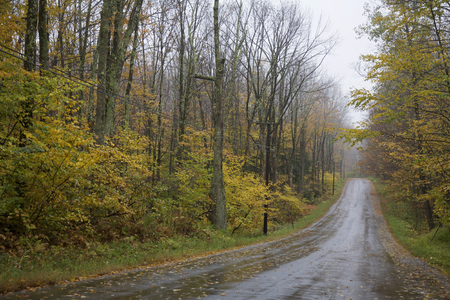 Countryside road in Autumn Foliage, Connecticut, USA