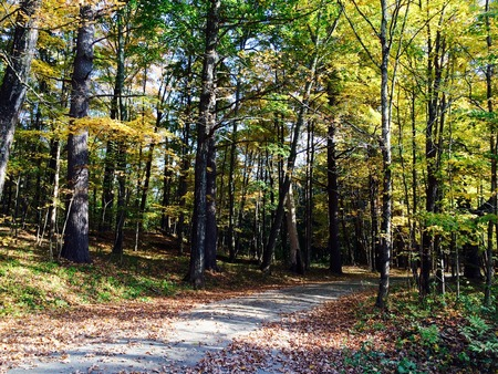 yellow trees: Yellow leaves on trees country area. USA Stock Photo