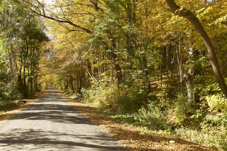 Gebladerte van de herfst in Vermont Stockfoto