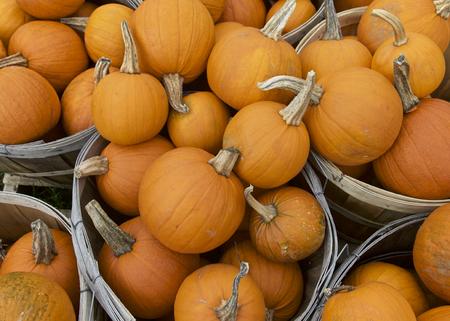 us sizes: Orange Pumpkin in Fall Season