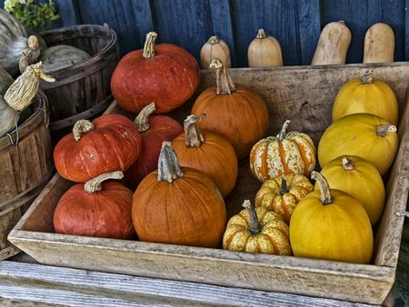 us sizes: Orange Pumpkin in Autumn Season colorful pumpkins at a market