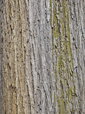 Strukturierter Baumrinde, Hintergrund
