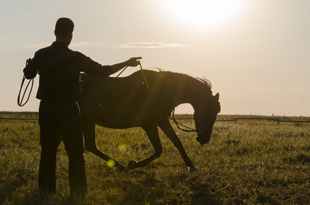 submissive: a Horse Submitting to a Man Stock Photo
