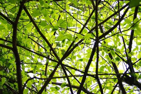 sotto l albero: sotto l'albero
