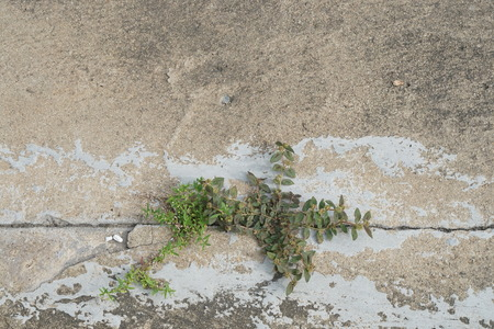 perseverance: Two plants struggling to grow through a cracked line on cement floor - struggle concept, perseverance, survival, opportunity, challenge, competition, motivation, hope of life, strength, endurance Stock Photo