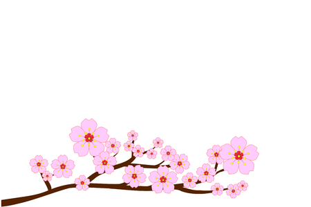 Full bloom cherry blossoms and blowing or flying petals isolated on white background. Beautiful pink Sakura flowers on brown branches with top copy-space for add text. Vector illustration, EPS10.