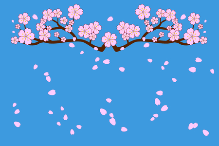 Full bloom cherry blossoms and blowing or flying petals on blue sky background. Beautiful pink Sakura flowers on brown branches with bottom copy-space for add text. Use as greeting / invitation card. Vector illustration, EPS10.
