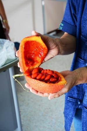 show plant: Fruit  Stock Photo