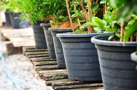 planter: Planter, planter, plants, plastic, leaves, stems, branches, wood, illustration, backdrop, background.