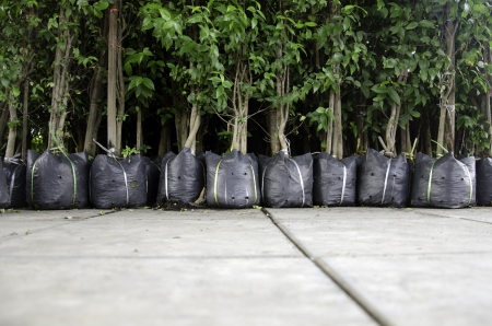 Plant a tree in the bag. Stock Photo