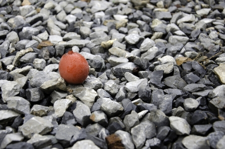 betelnut: Fruit of the pieces with a rock background.
