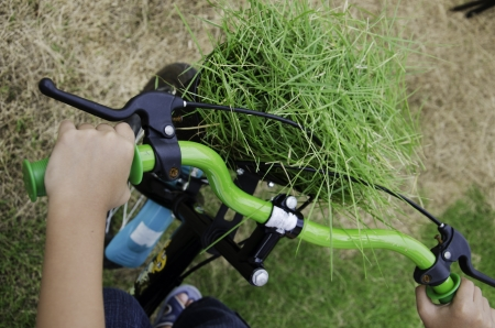 clippings: Grass clippings in the basket of the bicycle  Stock Photo