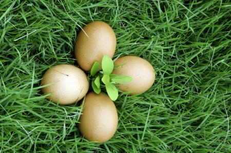 Eggs set against the turf