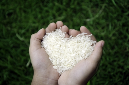 Rice in hand with grass in the background