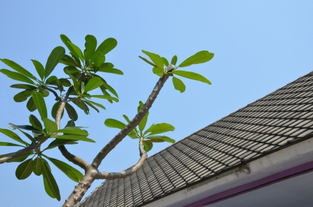 Roof with trees and sky as a backdrop  photo