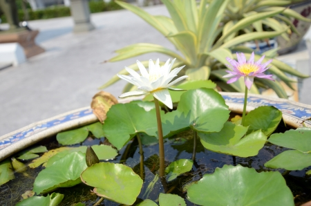 The flowers bloom in the water  photo