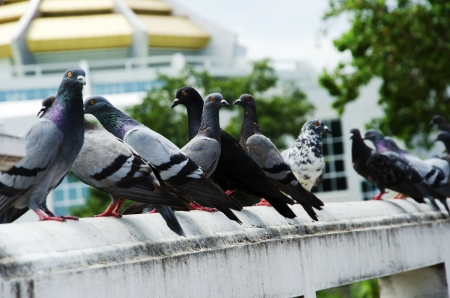 Pigeons on the railing of the building as a backdrop