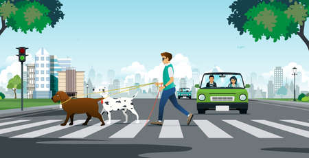 Guide dog for a blind man crossing a crosswalk.