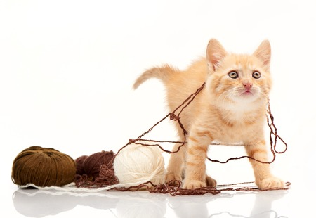 playful behaviour: Red kitten playing clews of thread isolated on white background Stock Photo