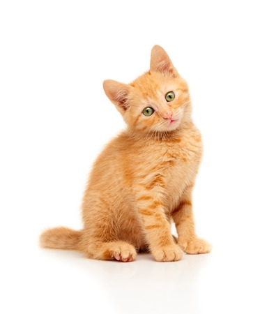 white fur: Cute little red kitten sitting and looking straight at camera, isolated on a white background