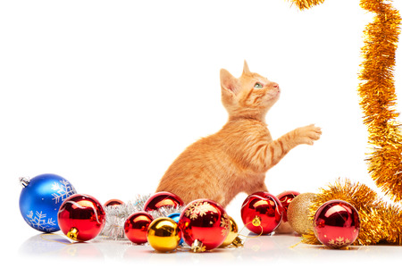 animals and pets: Cute little red kitten playing with golden tinsel near colorful and sparkly Christmas toys, isolated on a white background Stock Photo