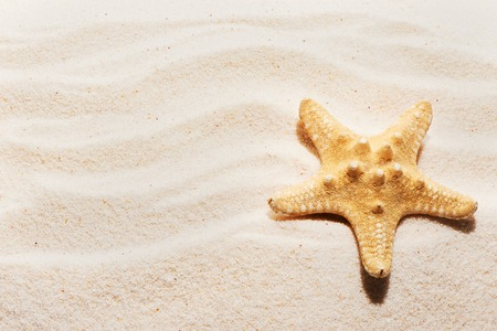 Starfish on sand with marks of waves. Summer beach background. View from above
