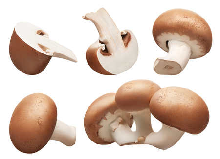 Collection of group, whole and cut fresh royal champignon mushrooms isolated on white background