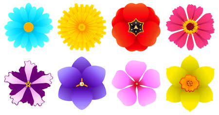 Different Kinds of Flowers - As seen from top - Top views Vector