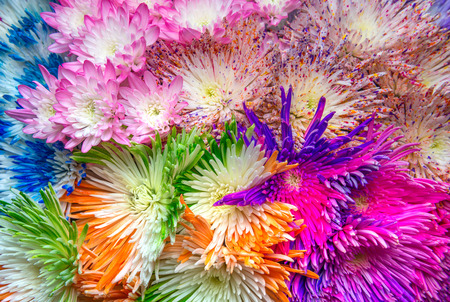 red, pink and violet aster flowers background Stock Photo