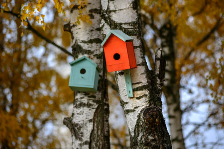 move in: Green bird house nesting-box hang on old birch tree trunk and branches move in wind